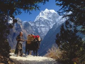 tr-asia-nepal-himalayas-girl_49630_600x450