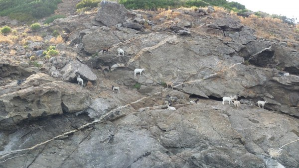 capre-isola-delba